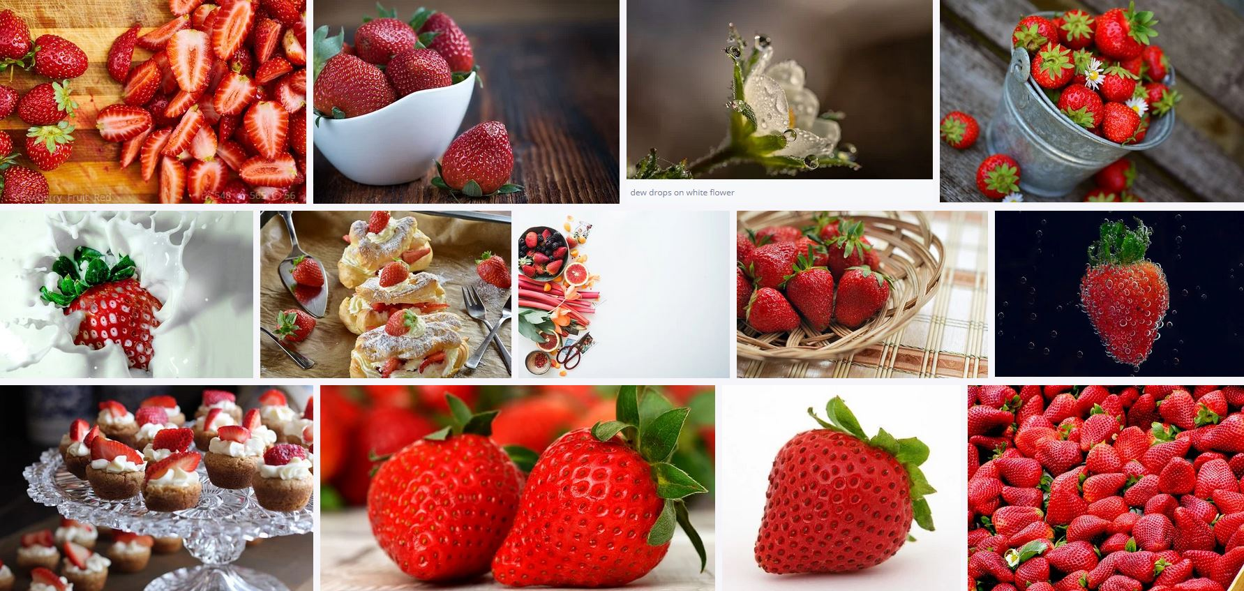 Sample image library showing search results for strawberries